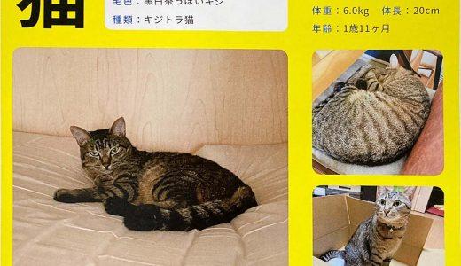 迷子猫さんがいます ( 周南市坂根町 付近 )  再投稿