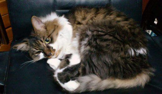 迷子猫さんがいます ( 周南市夜市 付近 ) → 無事におうちに戻りました。