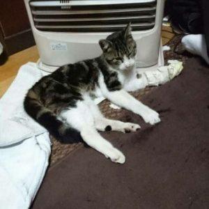 負傷猫さんが保護されています(周南市中央町交流プラザ)