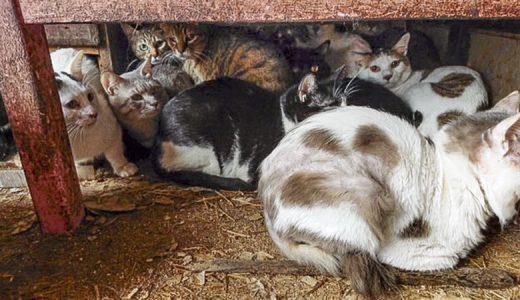 猫多頭飼育緊急レスキューにあたり ご支援のお願い①