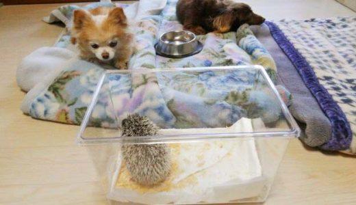 小さい犬達とは 問題なくやってます🐾