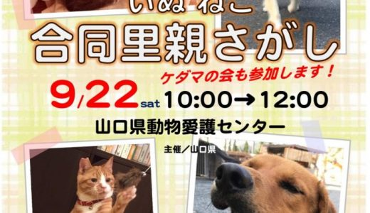 9月譲渡会のお知らせ(山口県動物愛護センター)