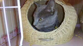迷い猫が保護されています ( 周南市楠木 )  →無事におうちに戻りました。