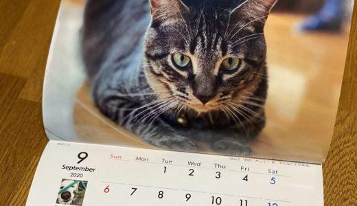 2020年ケダマの会オリジナルカレンダー 通信販売のお知らせ