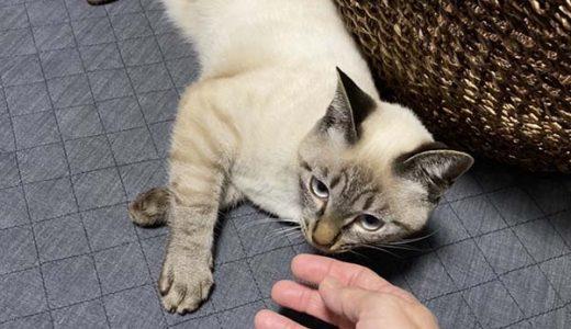 迷子猫さんがいます ( 下松市大字末武上付近 )