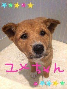 No.D545 茶毛 女の子 ご家族決定!!