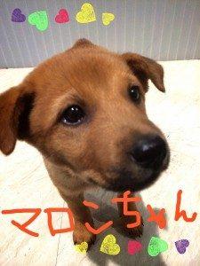 No.D546 茶毛 女の子 ご家族決定!