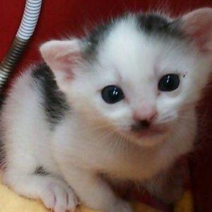 猫のボランティアさん急募!!