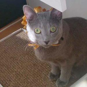 迷子猫さんがいます (周南市瀬戸見町)➡無事にお家に帰る事ができました