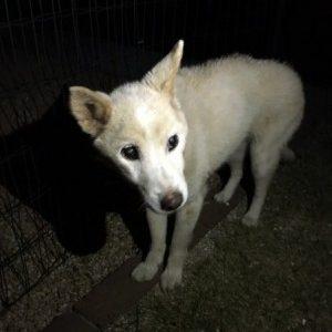 犬を保護しています(周南市戸田)➡お家に帰る事ができました