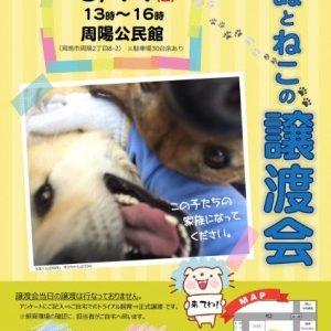 6月お見合い会のお知らせ(会場:周陽公民館)