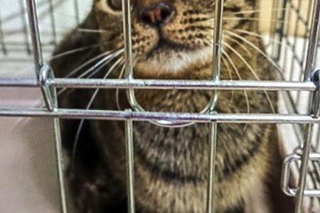 猫多頭飼育レスキュー経過報告②