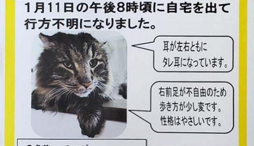 迷子猫さんがいます ( 防府市田島周辺 )→無事に保護されました!