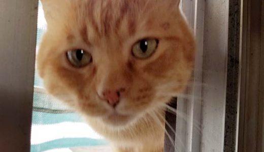 下松市末武上(上地)で迷い猫さんがいます。
