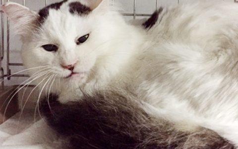 猫の多頭飼育レスキューのご報告⑦