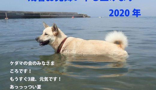 『やっぱり夏は海よね』・・ころちゃん日記