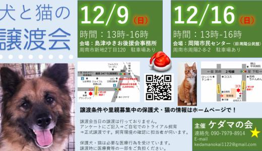 12月☆譲渡会のお知らせ☆追記1月譲渡会予定