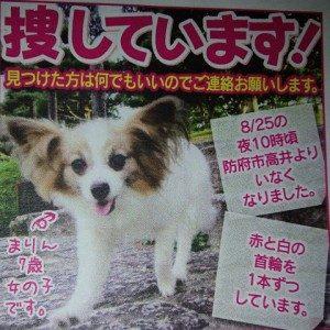 迷子の犬を探しています(再投稿)