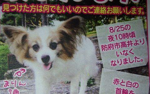 迷子の犬を探しています ~ 防府市