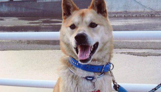 玖珂郡和木町で迷子犬がいます
