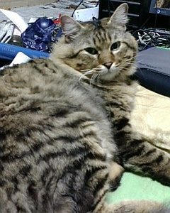 迷子猫を探しています ~ 周南市