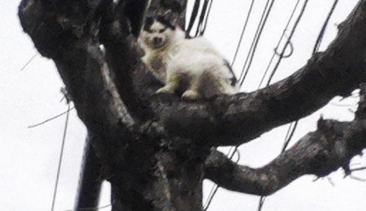 『猫の救助』