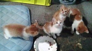 岩本子猫4