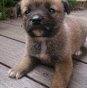 ケダマから犬猫を迎えてくださったご家族様へ。