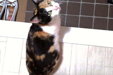 迷子猫さんがいます ( 下松市末武中和田 )