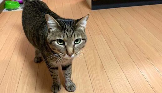 迷子猫さんがいます ( 平生町宇佐木 日立団地 )→無事におうちに戻りました。
