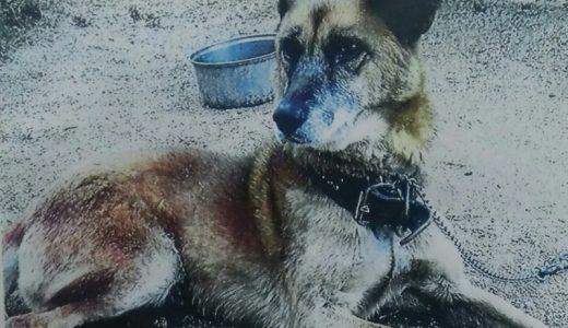 周南市で犬が迷子になっています(追記:発見されました)