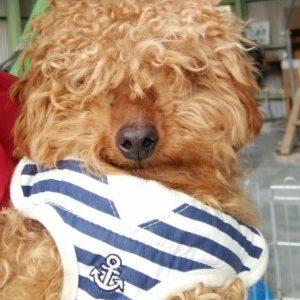 *周南健康福祉センター収容犬のご報告*