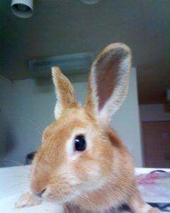 ウサギ 男の子