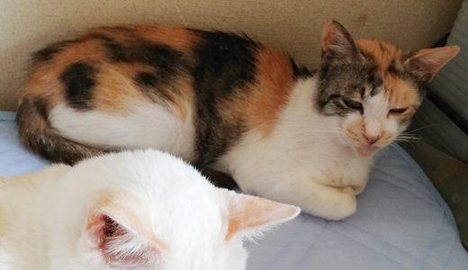 迷子猫さんがいます (山口市嘉川赤坂)