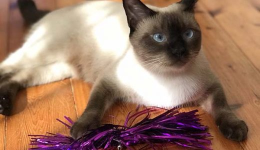迷子猫さんがいます ( 周南市夢ヶ丘 )→無事におうちに戻りました。