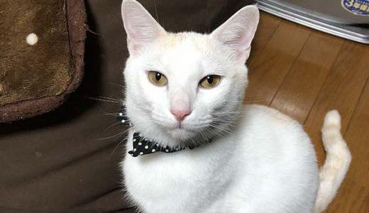 迷子猫さんがいます ( 宇部市妻崎開作 )