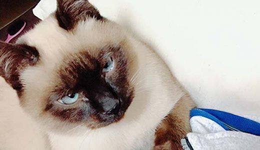 迷子猫さんがいます (光市 室積正木)→無事に保護されました.