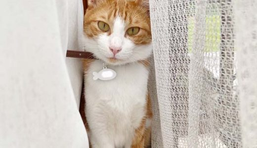 迷子猫さんがいます ( 山口県光市岩田 近政  )→無事に保護できました