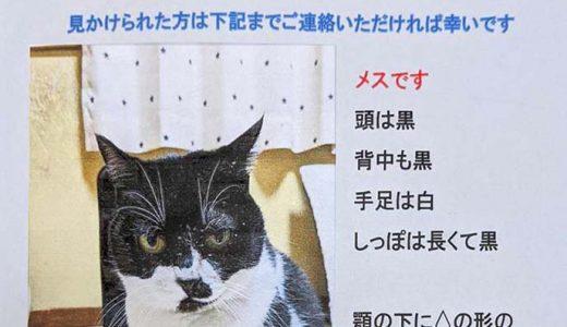 迷子猫さんがいます ( 山口市朝田のJAF付近 )
