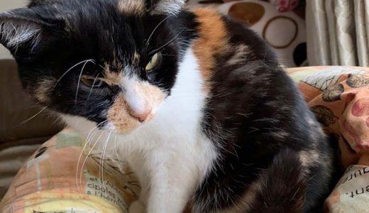 1月3日掲載 負傷猫さんのその後の様子です。