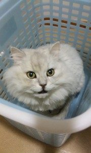 迷子猫ちゃん、帰宅です