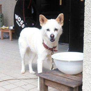 迷い犬チコちゃん情報(防府市)