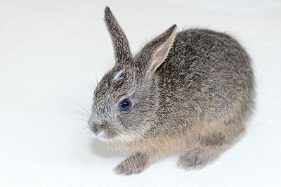 No.U1   子ウサギ