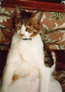 迷子の猫を探しています~周南市
