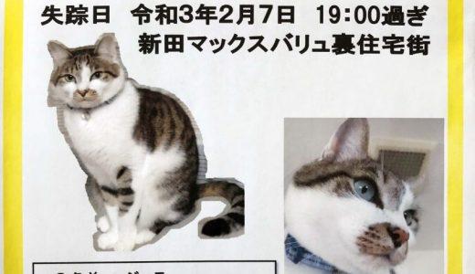 迷子猫さんがいます ( 防府市新田マックスバリュ裏住宅街 付近)→ 無事におうちに戻りました。