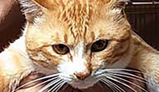 迷子猫さんがいます ( 下松市瑞穂町1丁目付近 )