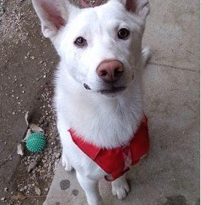 迷子の犬を探しています ~周南市