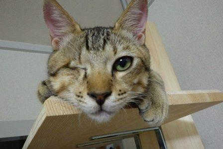 迷子の猫を探しています ~下松市