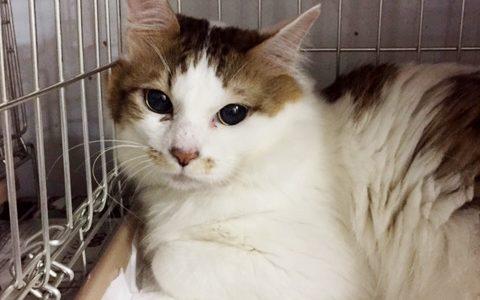 猫多頭飼育レスキュー経過報告⑤