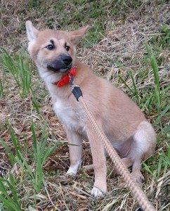 迷子の犬を探しています ~ 周南市